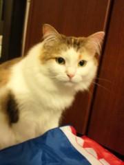 石神 瑤生子 公式ブログ/2012年初猫カフェ 画像2
