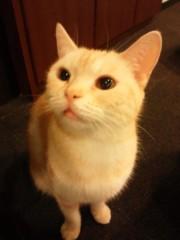 石神 瑤生子 公式ブログ/猫カフェ 画像1