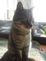 石神 瑤生子 公式ブログ/やっぱり猫が好き過ぎる!!! 画像2