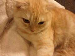 石神 瑤生子 公式ブログ/2012年初猫カフェ 画像1
