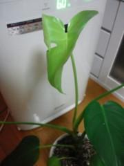 石神 瑤生子 公式ブログ/成長する 画像1