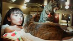 森崎愛 公式ブログ/猫カフェ 画像1