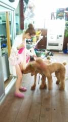 奈々子 公式ブログ/国際通りですごい犬発見! 画像2
