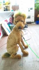 奈々子 公式ブログ/国際通りですごい犬発見! 画像1