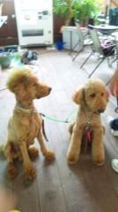 奈々子 公式ブログ/国際通りですごい犬発見! 画像3