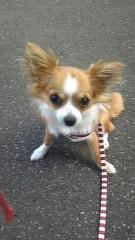 岡和田美沙 公式ブログ/お散歩 画像2