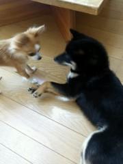 岡和田美沙 公式ブログ/ワンコ 画像2