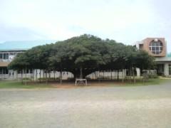 染谷将太 公式ブログ/このぉ木なんの木 画像1