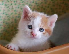 中村円香 公式ブログ/2月22日は猫の日! 画像1