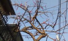 コウメ太夫 公式ブログ/春が来た! 画像1