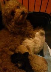 ななみ 公式ブログ/犬の赤ちゃんU^q^U 画像2