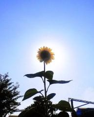 沙人 プライベート画像/日常心動風景 太陽の共演2