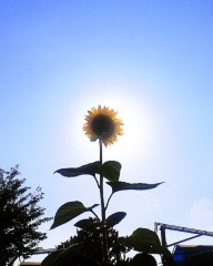 沙人(しゃと) プライベート画像/日常心動風景 太陽の共演2
