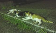 沙人(しゃと) 公式ブログ/夜の公園と猫一家 画像1