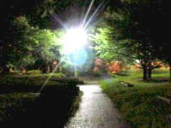 沙人 公式ブログ/夜の公園と猫一家 画像2