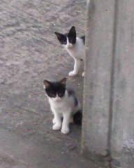 沙人 公式ブログ/猫のお見送り=^_^= 画像1
