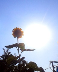 沙人 プライベート画像/日常心動風景 太陽の共演1