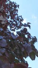 中ゆうこ 公式ブログ/山の紅葉が見たいなぁ 画像1