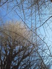 中ゆうこ 公式ブログ/白梅の蕾はまだ固く。 画像1