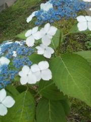 中ゆうこ 公式ブログ/梅雨を楽しむ。 画像2