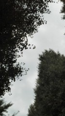中ゆうこ 公式ブログ/曇り空、のぞく。 画像1