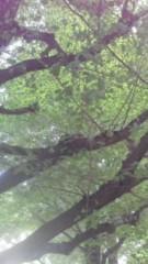 中ゆうこ 公式ブログ/イチョウの木が好き 画像1
