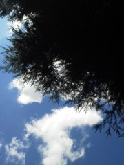 中ゆうこ プライベート画像 空模様