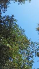 中ゆうこ 公式ブログ/秋の木漏れ日は 画像1