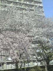 妃羽理 公式ブログ/お花見 画像2