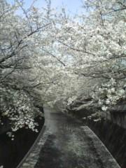 妃羽理 公式ブログ/お花見 画像1