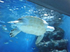 西澤桃子 公式ブログ/おたる水族館 画像3