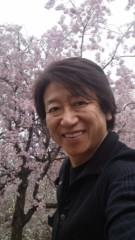 井上和彦 公式ブログ/しだれ桜 画像1