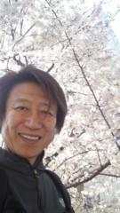 井上和彦 公式ブログ/桜〜! 画像1