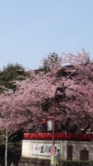 井上和彦 公式ブログ/満開 画像1