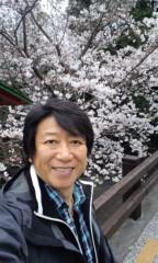 井上和彦 公式ブログ/桜が咲きました 画像2