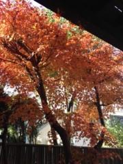 井坂聡 公式ブログ/紅葉満開‼ 画像1