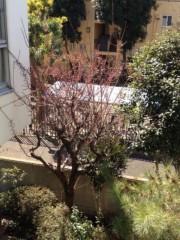 井坂聡 公式ブログ/春はそこまで! 画像1