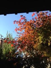 井坂聡 公式ブログ/庭のモミジが 画像1