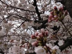 井坂聡 公式ブログ/巣立ち 画像2