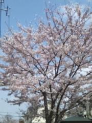 井坂聡 公式ブログ/新年度の始まり 画像1