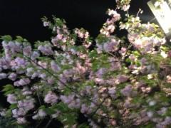 井坂聡 公式ブログ/お花見⁈ 画像1