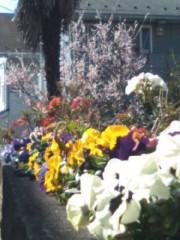 井坂聡 公式ブログ/春はそこまで来てる 画像1