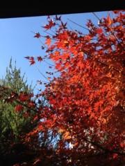 井坂聡 公式ブログ/紅葉満開‼ 画像3