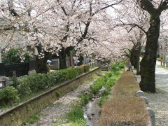 井坂聡 公式ブログ/桜・さくら・サクラ 画像1