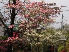井坂聡 公式ブログ/花の季節 画像1
