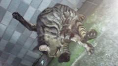 鈴木淳(しながわてれび出演者blog) 公式ブログ/あの猫は? 画像1