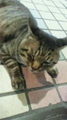 鈴木淳(しながわてれび出演者blog) 公式ブログ/アイドル猫! 画像1