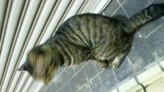 鈴木淳(しながわてれび出演者blog) 公式ブログ/あの猫は今! 画像1