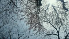 鈴木淳(しながわてれび出演者blog) 公式ブログ/桜の木の下で! 画像1
