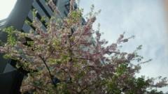 鈴木淳(しながわてれび出演者blog) 公式ブログ/お台場の桜! 画像2